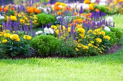 Expert Landscaping Company in Greenwich, SE10